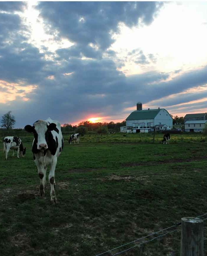 Amish Farm Stay Gallery