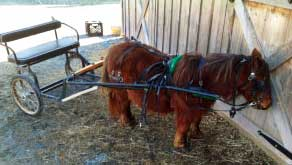 Pony cart at Dutch Homestead
