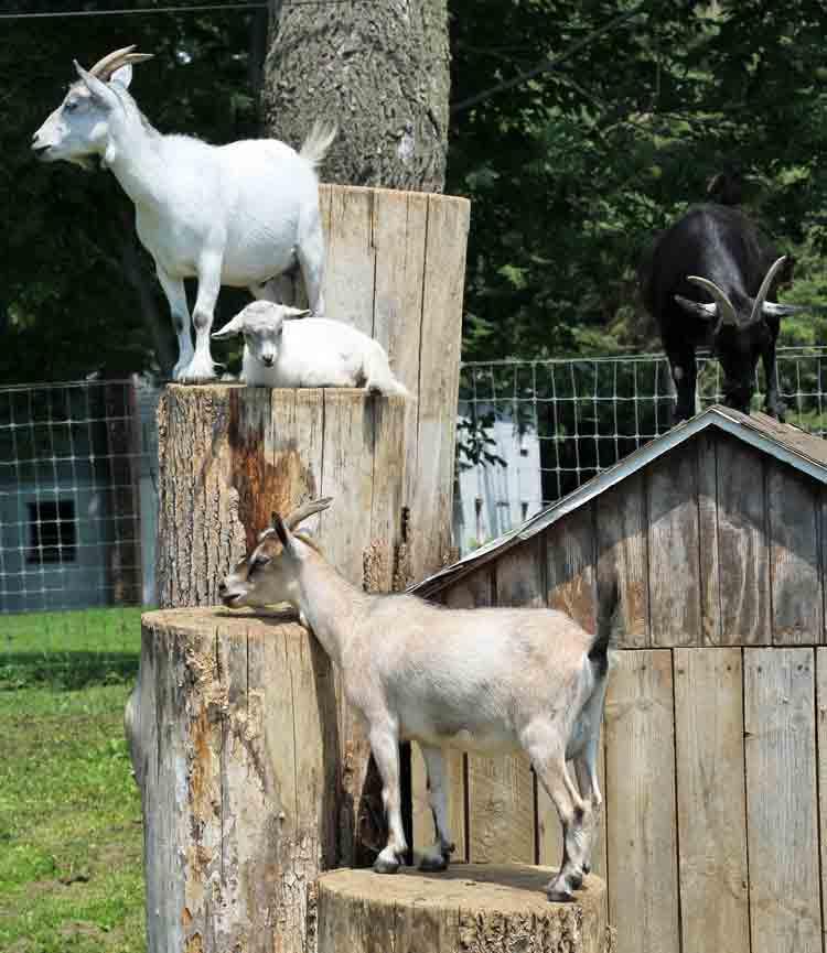 Reviews - Amish Farm Stay
