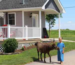 Amish girl with pony